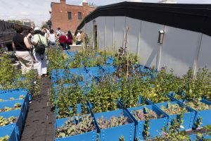 Green Garage's very own rooftop farm. Image courtesy of Green Garage Detroit.